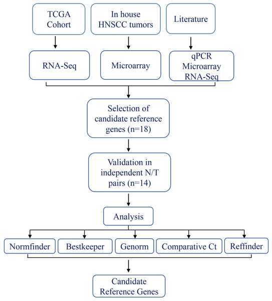 Schema indicating the selection criteria and validation of the internal control genes.
