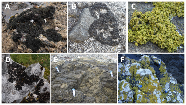Examples of lichens collected in this study.