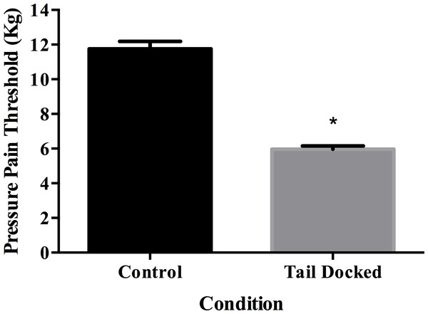 Least square means and standard error for pressure pain threshold in tail docked (n=133) and control cows (n=31).