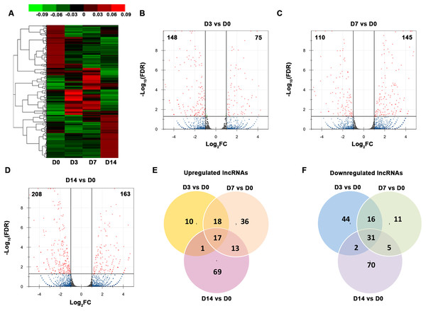 Characterization of the lncRNA transcriptome.