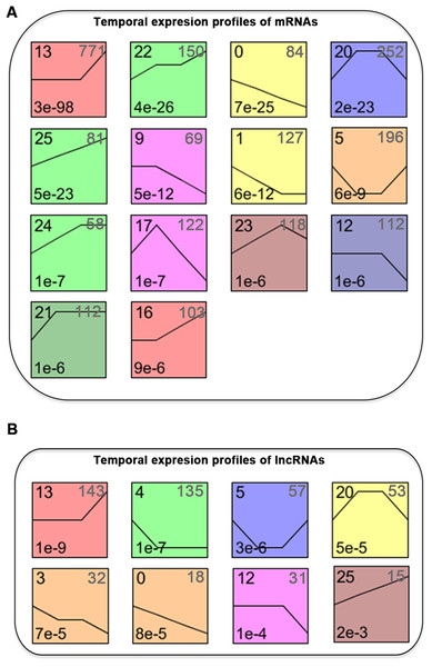 STEM identified the temporal expression profiles of mRNAs (A) and lncRNAs (B) with a p-value < 0.05.