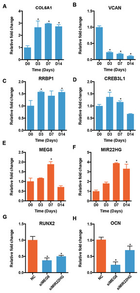 Validation of the expression of genes in profile 12.