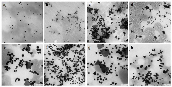 TEM of Au nanoparticles.