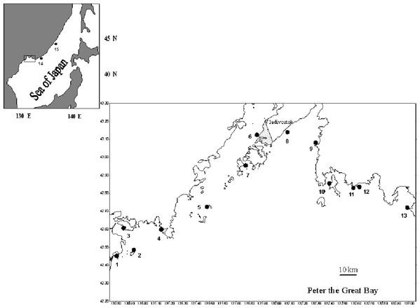 Sites of sampling of the scallop Patinopecten yessoensis (black circles).