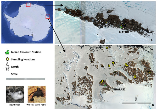 Seabird sampling locations in Antarctica.