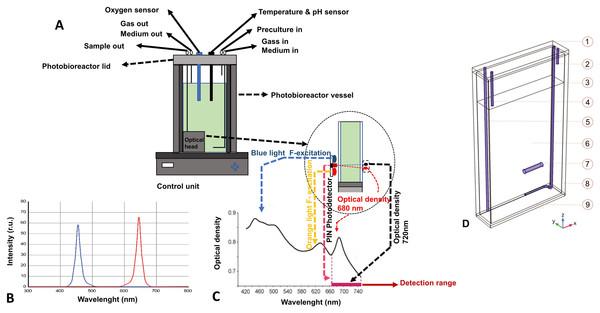 Photobioreactor schematic representation.