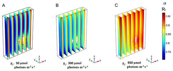 3D trend of normalized light intensity along YZ slices of the model PBR.