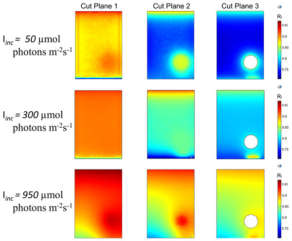 2D trend of normalized light intensity along the XZ slices of the model PBR.