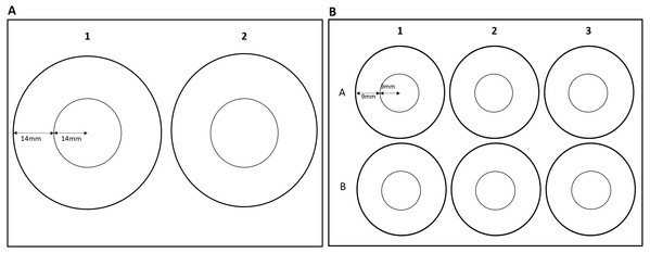 Dimensions of zones for (A) two-well plate and (B) six-well plate.