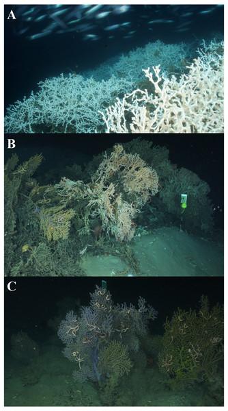 Coral habitat types.