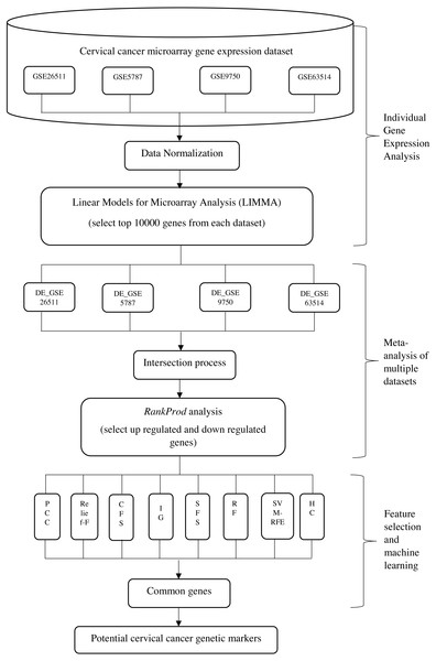 Framework for the proposed integrative approach of meta-analysis and machine learning in gene expression profiling of cervical cancer.