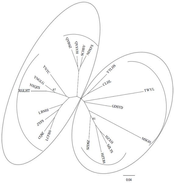 NJ tree based on genetic distances (Nei, 1987) of 21 studied populations of B. schreberi.
