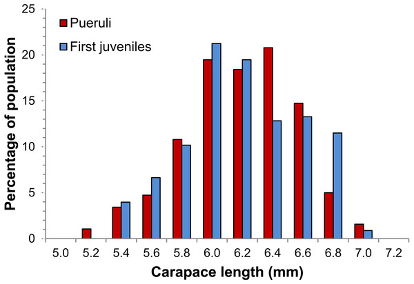 Size distribution of pueruli and first juveniles of Panulirus argus.
