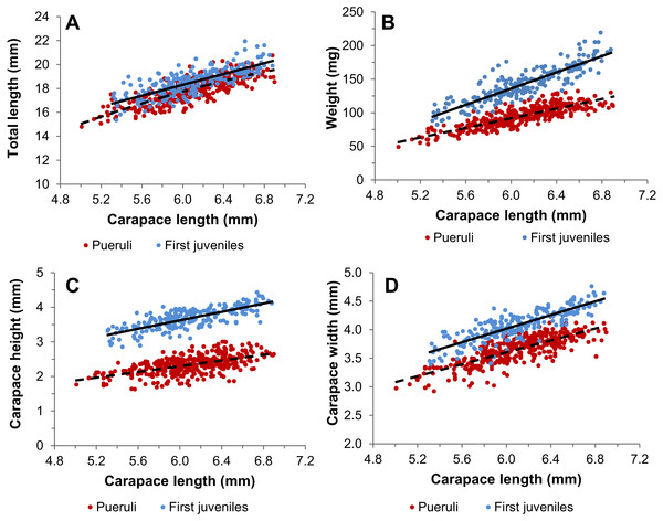 Morphometric relationships of pueruli and first juveniles.