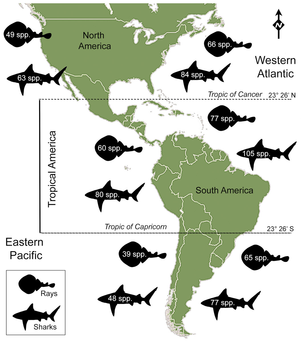 Shark and ray diversity in the Tropical America (Neotropics