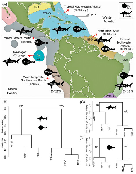 Shark and ray species diversity and similarity analysis among the six marine provinces of Tropical America.
