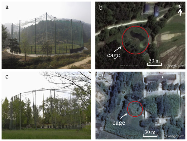 Photos and images showing the size and surroundings of the acclimation cages used as test sites at DZ (A and B) and TC (C and D).