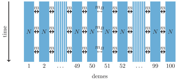 One-dimensional model of a barrier to gene flow in a nearest-neighbor stepping-stone environment with 100 demes.