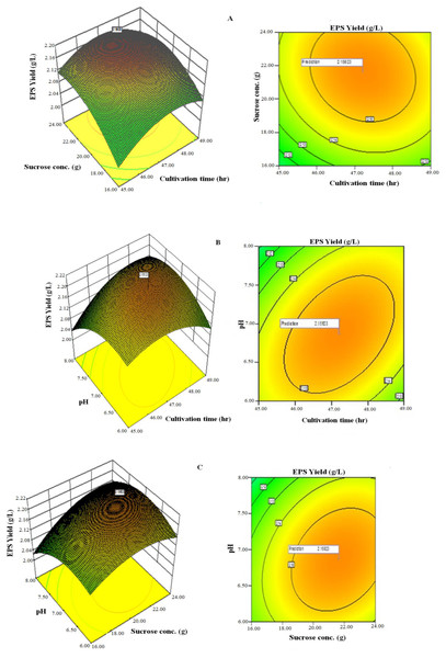 Response surface three-dimensional plots and corresponding contour plots of the three significant variables on EPS yield for Lactobacillus plantarum YO175.