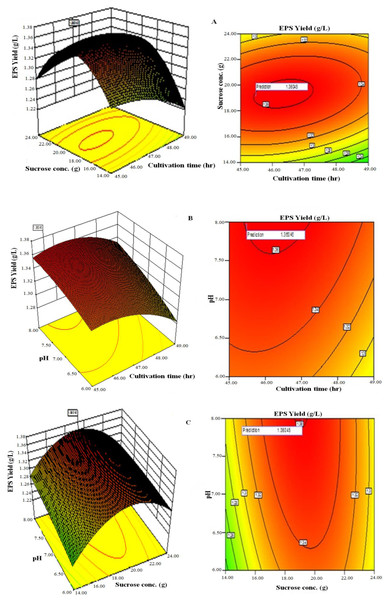 Response surface three-dimensional plots and corresponding contour plots of the three significant variables on EPS yield for Lactobacillus plantarum OF101