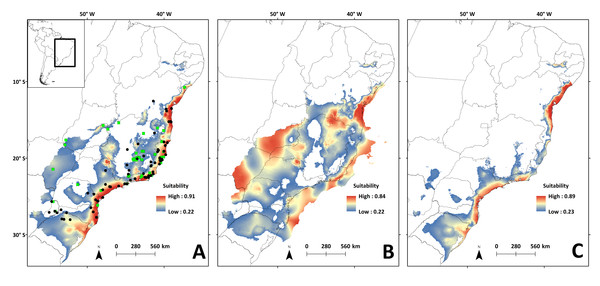 Species distribution models for the river basins where N. squamipes occurs.