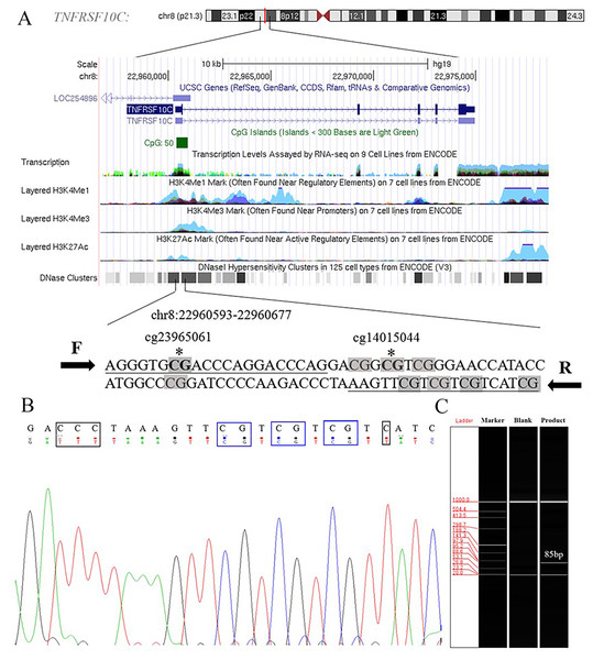 Primers and target amplification sequence in TNFRSF10C promoter CpG island (CGI) region.
