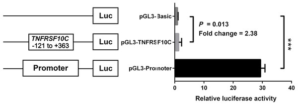 Dual-luciferase reporter gene assay in HEK-293T cell line.