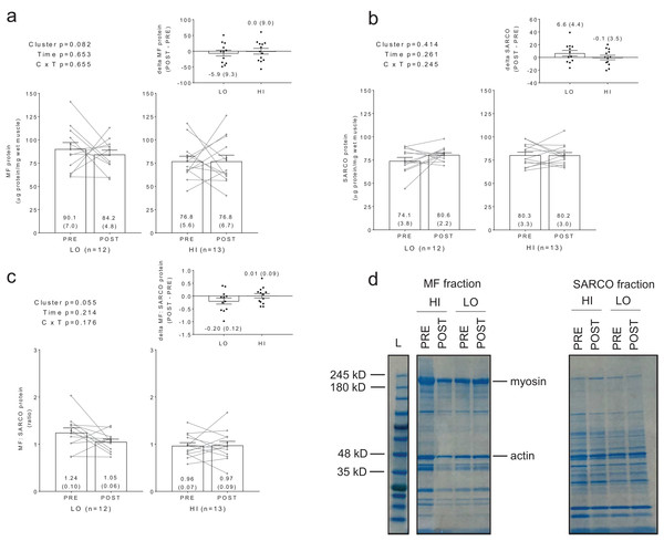 Differences in myofibril and sarcoplasmic protein concentrations between clusters prior to and following training.