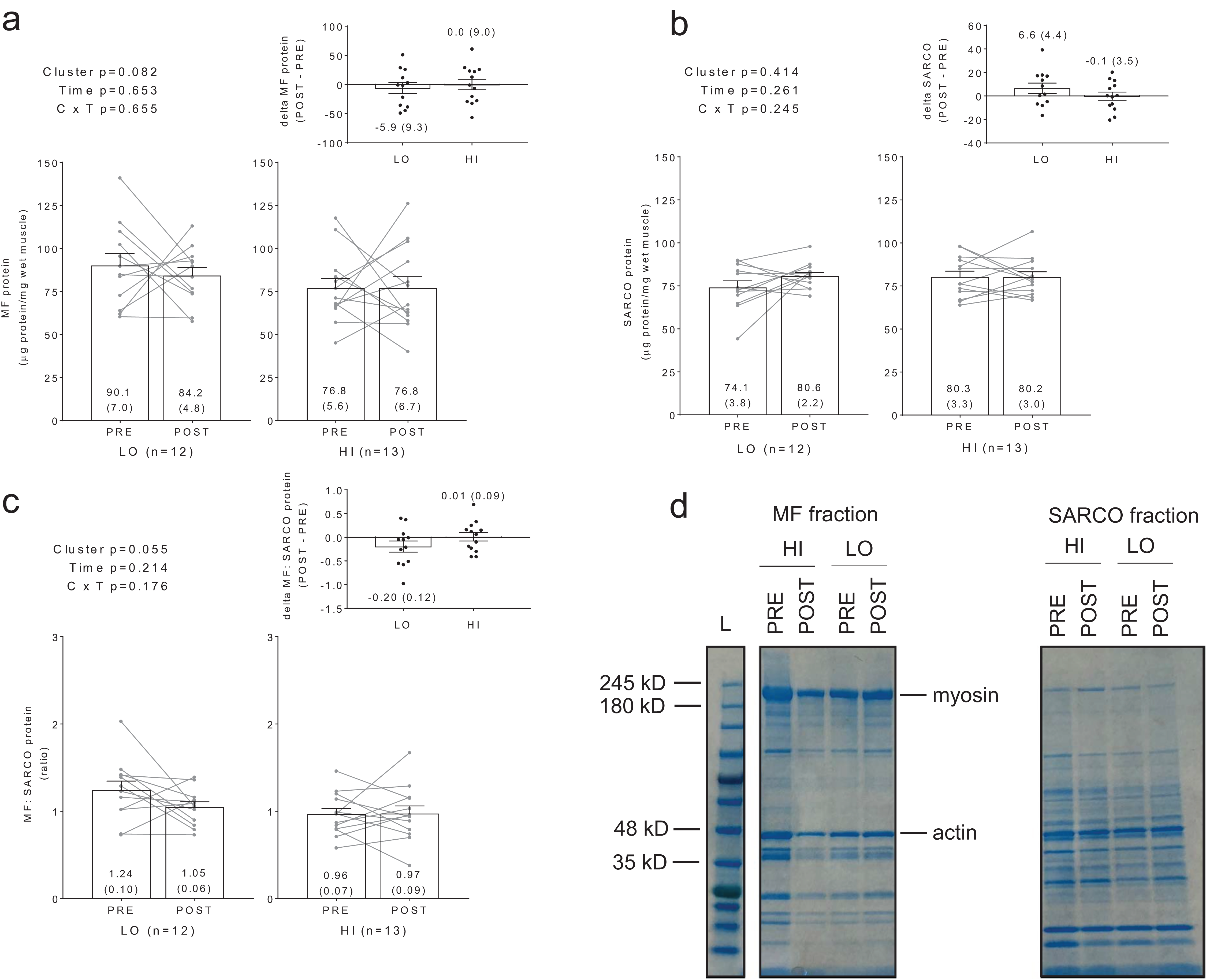 Skeletal muscle mitochondrial volume and myozenin-1 protein ...