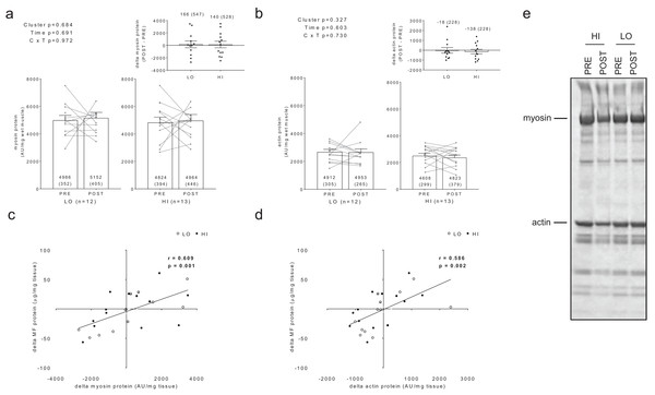 Differences in myosin and actin content between clusters prior to and following training.