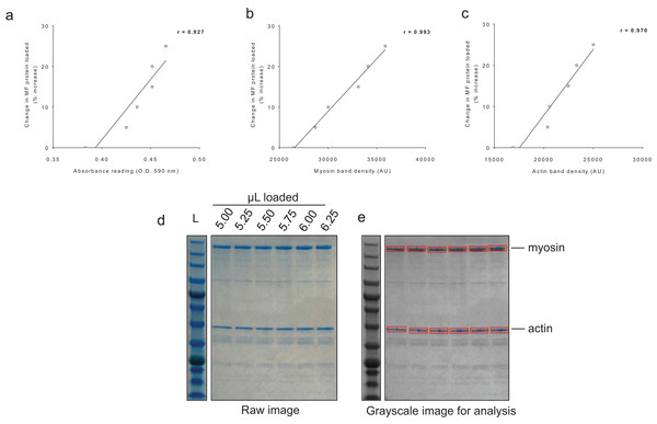 Sensitivity of BCA and Coomassie stain for detecting protein changes.