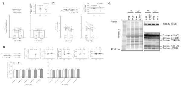 No significant main effects or cluster × time interaction existed for PGC-1α protein levels (A).