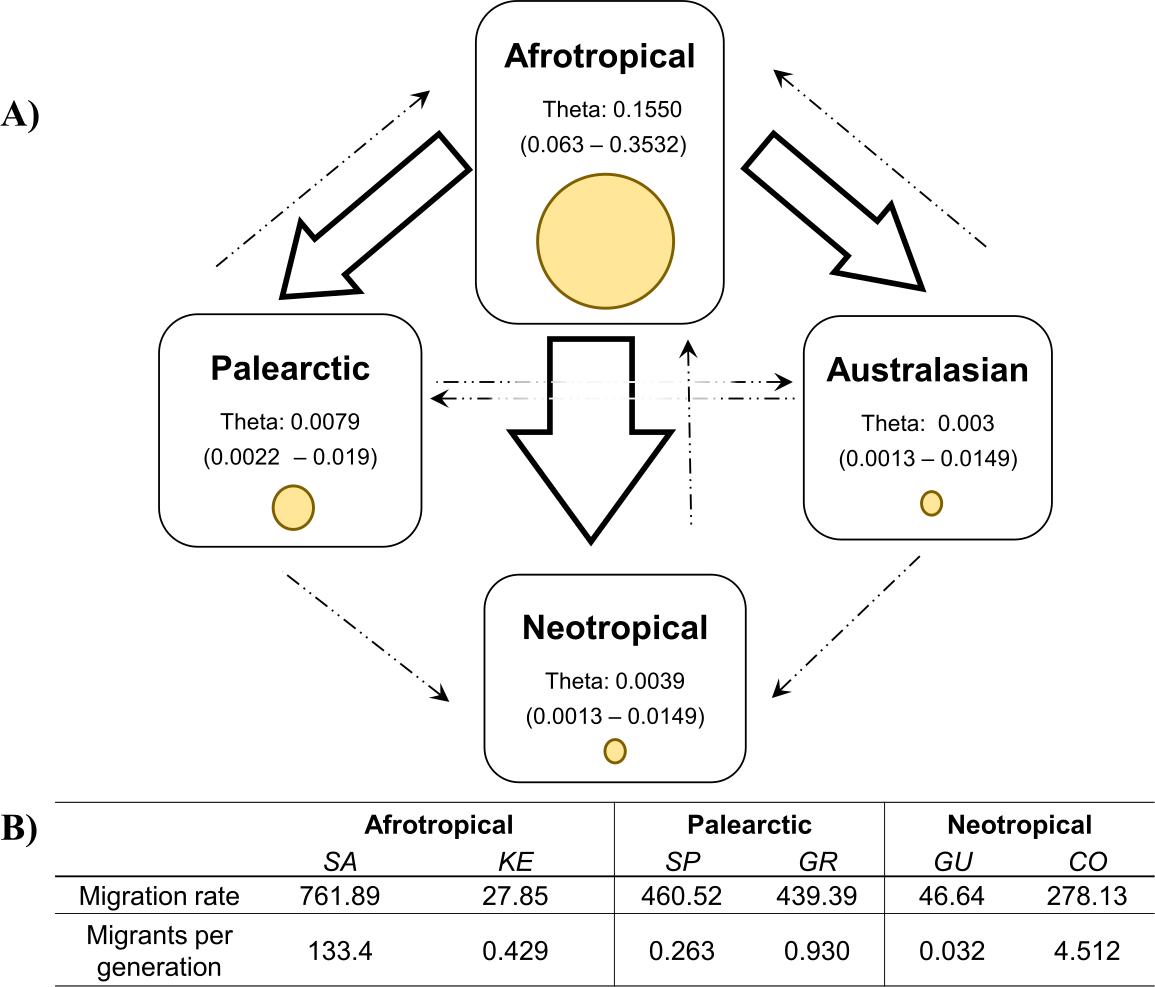 Population Genetics And Migration Pathways Of The Mediterranean