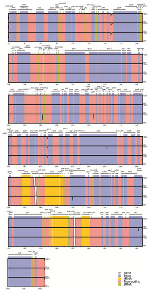 Visualization of alignment of the peanut chloroplast genome sequences.