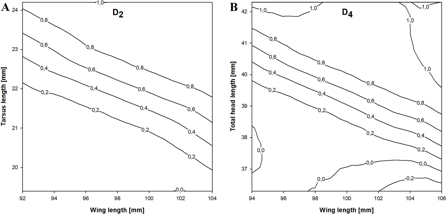 Sexual dimorphism in adult Little Stints (Calidris minuta