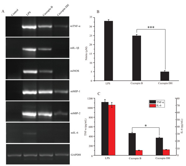 Effect of peptides on LPS-stimulated pro-inflammatory mediators in RAW264.7 cells.