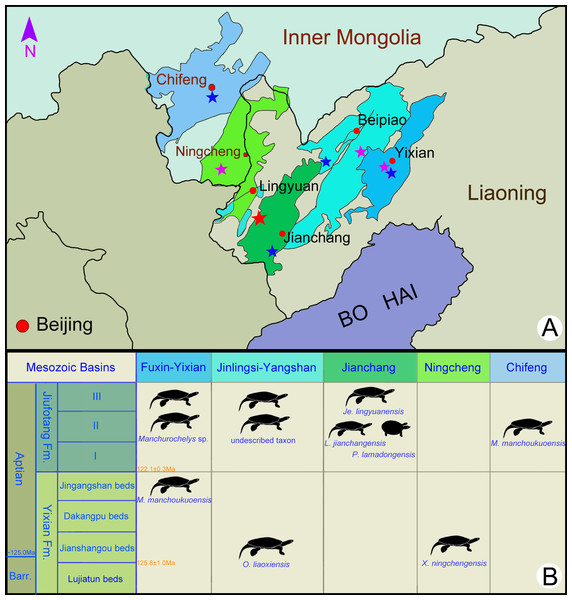 Fossil localities (A) and stratigraphic distribution (B) of turtles in the type areas of the Jehol Biota in northeastern China.
