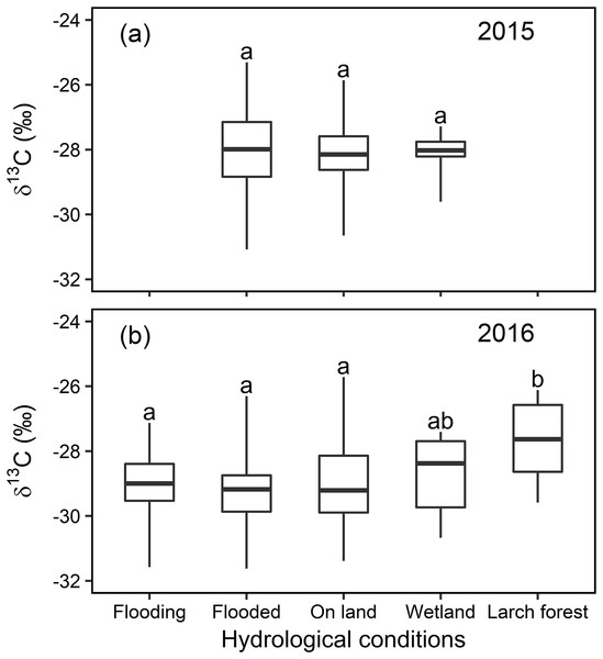 Statistical analysis for the foliar δ13C values (‰) under different hydrological conditions at local scale in 2015 and 2016.