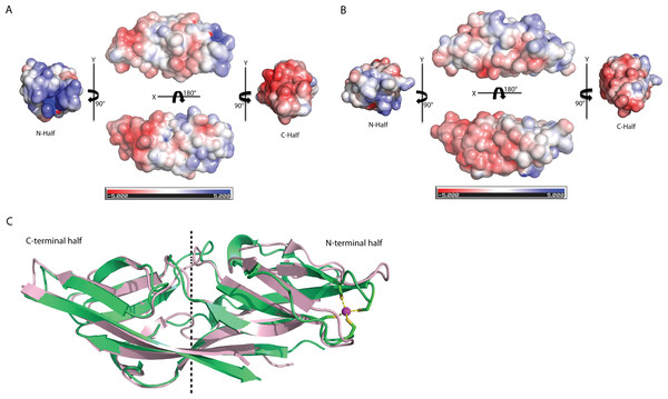 Structure comparison of human C1ORF123 and Plasmodium falciparum homologue.