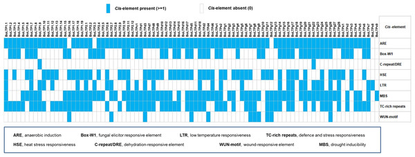 Summary of stress-related cis-elements in the upstream regions of BoLTP genes.