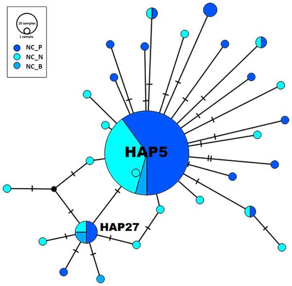 Haplotype network—North Carolina.