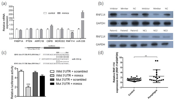 RNF114 was found as the target gene of miR-338-3p.