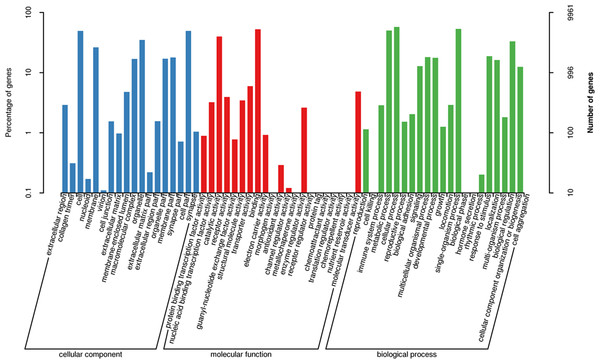 Functional gene ontology classification of the A. dabryanus gonadal transcriptome.