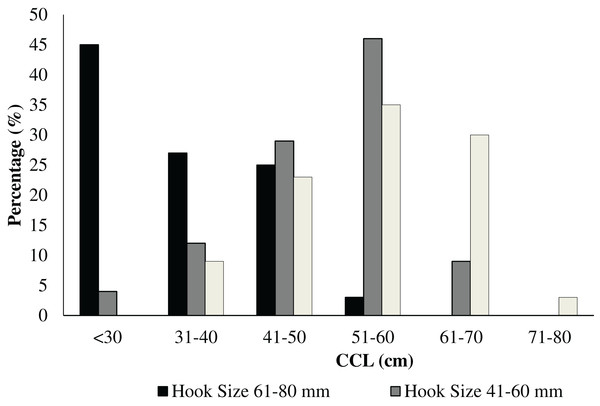 Distribution of the number and the size (range: 21–40, 41–60, and 61–80 mm) of hooks in relation to the carapacial size (CCL) in cm of the rescued C. caretta specimens.