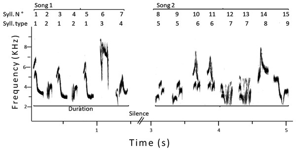 Sonogram of two consecutive songs of a male pied flycatcher.