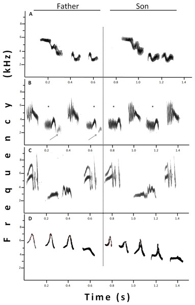 Sonograms that show different examples of shared syllables between fathers (at the left) and sons (at the right).
