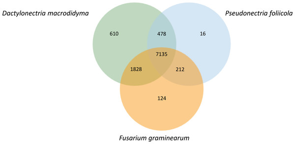 Orthologous genes shared between Pseudonectria foliicola, Dactylonectria macrodidyma and Fusarium graminearum.