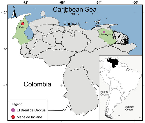 Geographical map of Venezuela showing the relative position of the deposits where the snake remains were found.