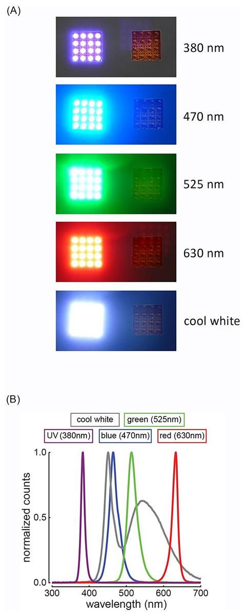 Assessing bird avoidance of high-contrast lights using a
