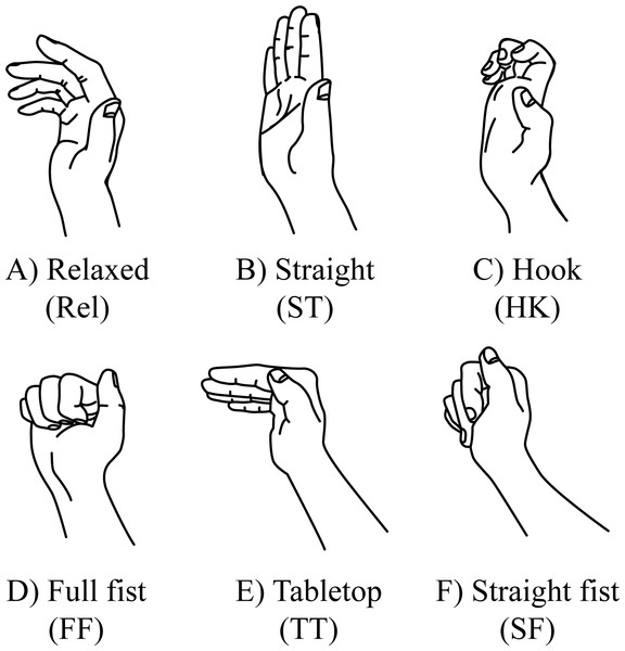 Relaxed fingers and finger tendon gliding positions.